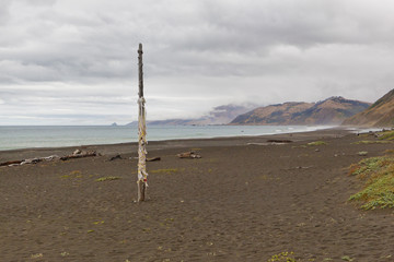 A ragged maypole on Mattole Beach