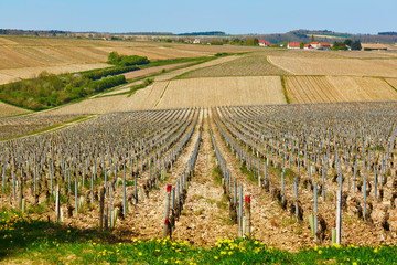 Beautiful wineyards in Burgundy