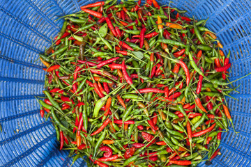 Basket of freshly harvested tomato chilies
