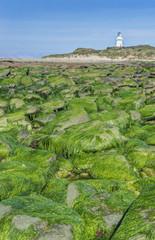 Algae covering rocks at beach, Waipapa, Catlins, New Zealand
