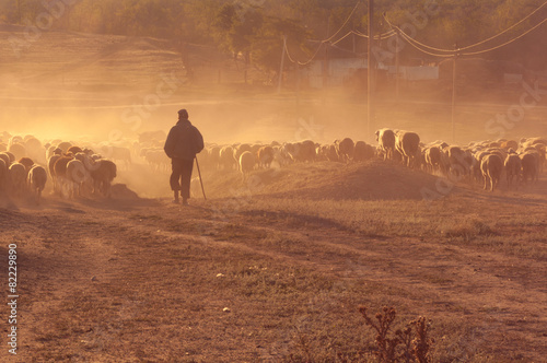 Shepherd with flock of sheep at sunset - 82229890