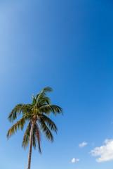 Coconut Palm in Brilliant Sky