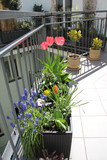 Beautiful modern terrace with mix of spring flowers - 82238603