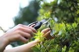 Pielęgnacja roślin w ogrodzie