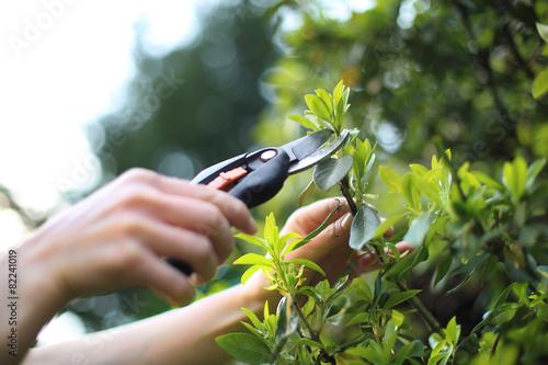 Pielęgnacja roślin w ogrodzie - 82241019