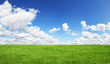 Green field and blue sky - 82244459