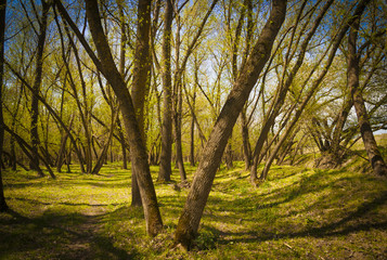 Romanian spring forest