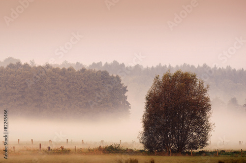 misty morning meaddow in the autumn © nico_grafie