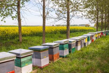 hive in a field