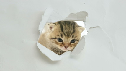 Kitten in a paper hole