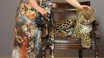 woman's hand stroking a leopard 's head