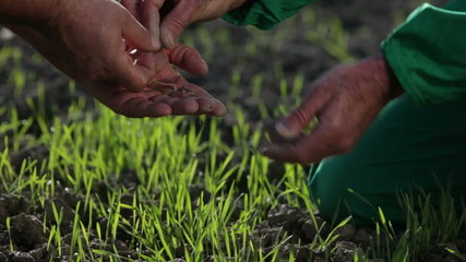 Farmers hands taking care to sprouts