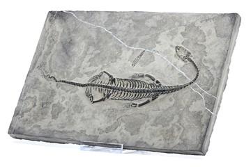 Keichousaurus08