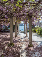 Relaxing front yard  with pillars and wisteria flowers