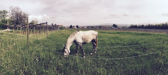 A lonely horse in a field with a nature green countyside