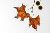 Natureza outono poster