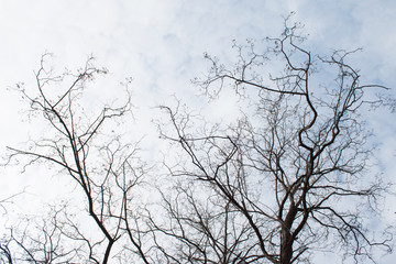 bare branches against a sky