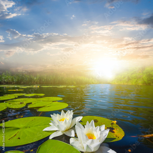 white lilies at the evening