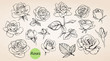 Set of hand drawn roses. Vector - 82289078