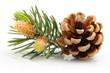 Pine cone - 82289421