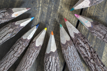 Group of bark covered branch multicolored pencils