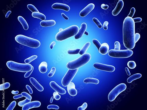 Colony of bacteria