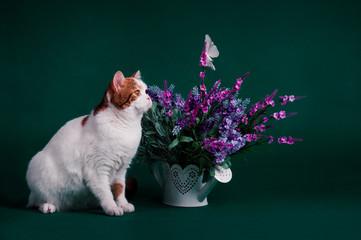 Кот возле цветов