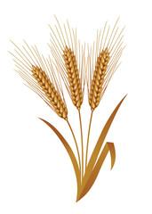 Illustration of wheat.