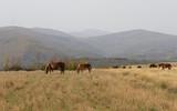 Paisaje otoñal con colinas y caballos pastando