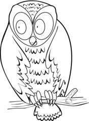 Coloring with owl