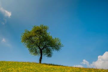 albero  estate