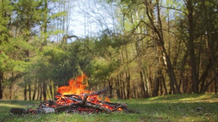 Campfire in the forest with bird chirping