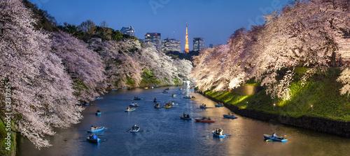 Fototapeta Sakura in Tokyo Chidorigafuchi Japan