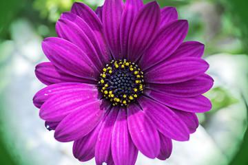Beautiful star flower