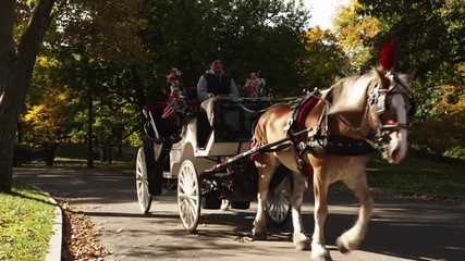 CU Mature couple riding in horse drawn carriage through Central Park, New York City, New York State, USA