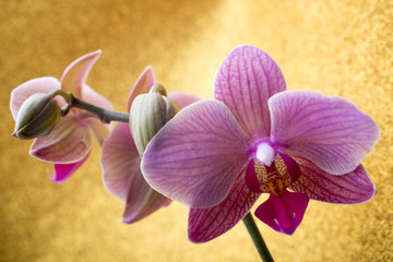 Pink orchid on colored background.