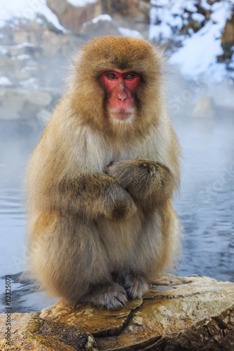 Foto op Aluminium Aap Snow monkey, Japan