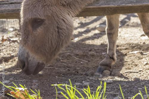 Fotobehang Ezel Cute Donkey