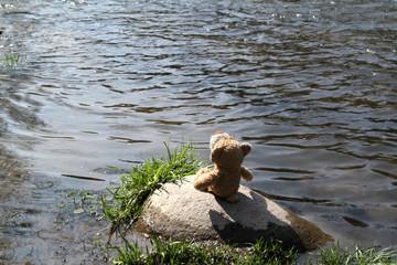 Teddybär auf einer einsamen Insel