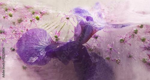 Papiers peints Iris Frozen flower of iris