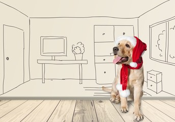 Pet. Retriever puppy in a Santa Claus hat, isolated on white
