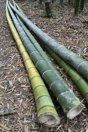 Foto op Canvas Bamboo bamboo plants