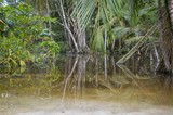 Fotoroleta Dschungel nach dem Regen