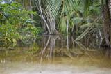Fototapeta Dschungel nach dem Regen