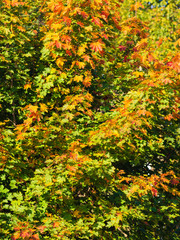 Fall trees yellow orange leaves nature background