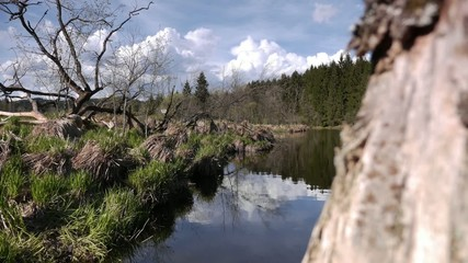 Timelapse River Tree Clouds