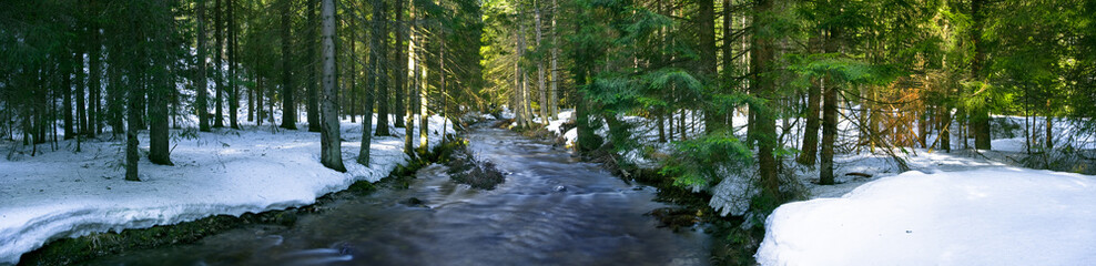 Panoramic view of the mountain river in the middle of the forest