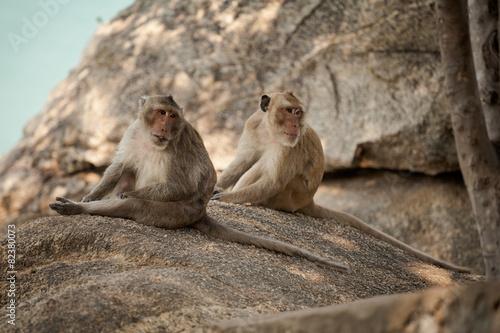 Foto op Aluminium Aap Monkey in Khao Takiab temple