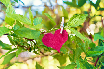 nature greeting card background - heart at tree