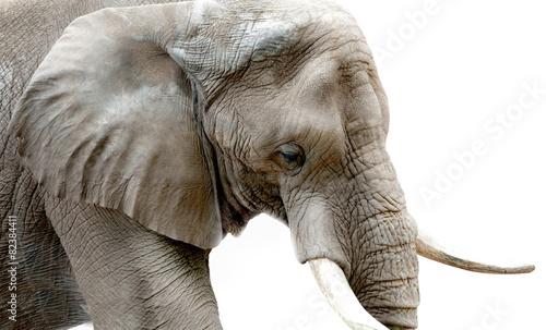 Aluminium Olifant Elephant Close Up High Key